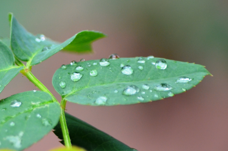 'बारिश'।तस्वीर: बृजेश सुकुमारन